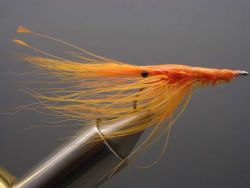 x-patty-shrimp-fluo-orange-463
