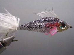 twinkletube-minnow-470